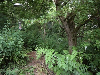 Healey Dell Woodland